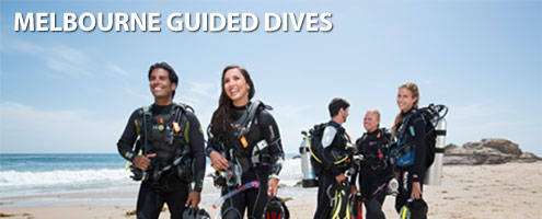 Melbourne Guided Dives