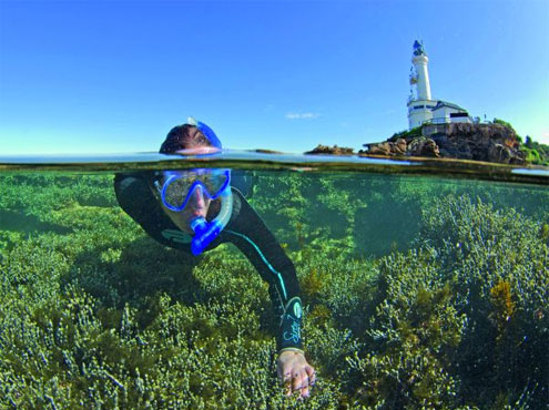 Snorkelling in Melbourne's Marine Parks