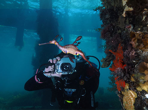 Scuba dive and take take photos of Weedy Seadragons at Flinders Pier